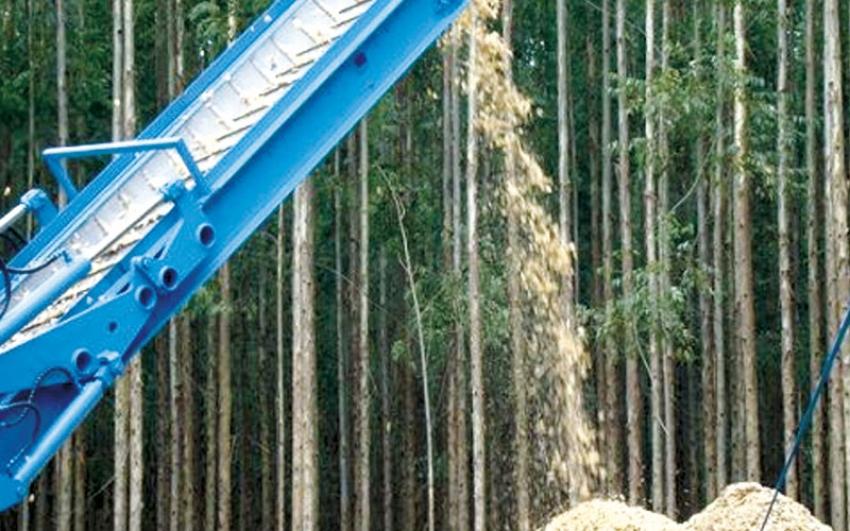 Crece desarrollo de la industria de Biomasa, la energía renovable de los bosques