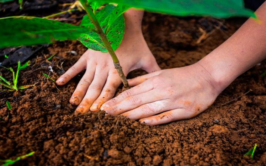 Con la Alianza EPM-PNUD, se avanza en la meta de sembrar un millón de árboles al 2020